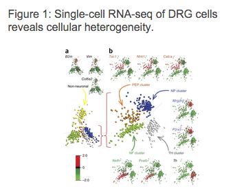 New visualisation and clustering methods for single-cell RNA-seq data